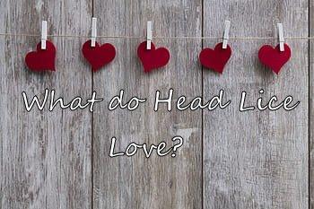 LCA Little Rock what head lice love